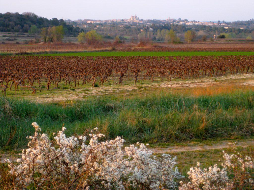 Country view towards Uzès, Langudeoc Roussillon, France