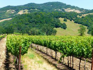 Napa Valley vineyards, California, USA