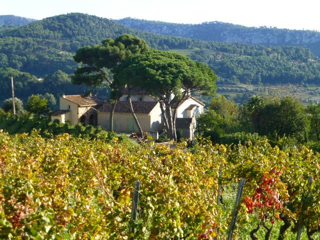 The vineyards of Bandol, Provence, France