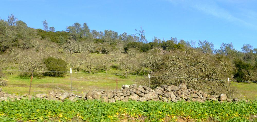 Napa Valley Countryside