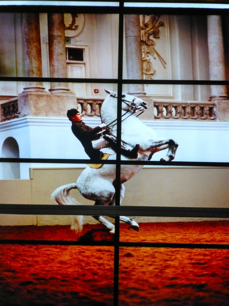 Performance at Spanish Riding School, Vienna, Austria
