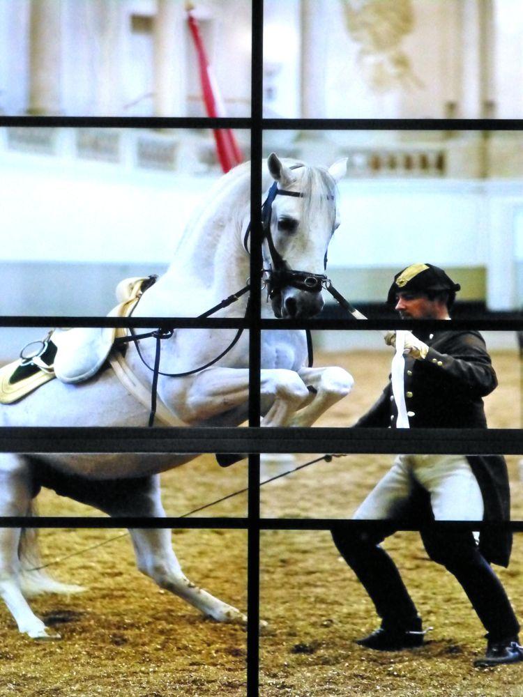 Performing at Spanish Riding School,Vienna, Austria