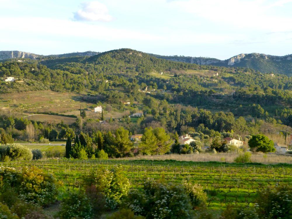 Vineyards of Bandol and Les Castellets, Var, Provence, France