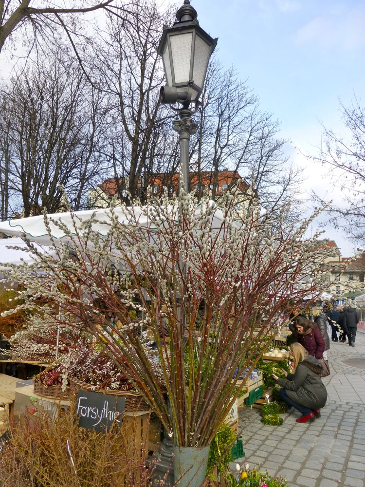 Willow for sale at the Munich Market, Marienplatz