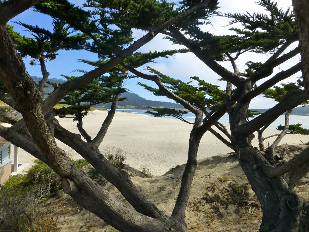 River beach through the Cypress, Carmel, California