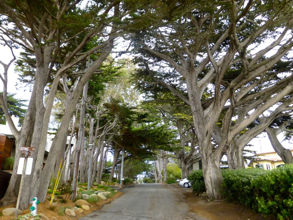 Street in Carmel, California, USA