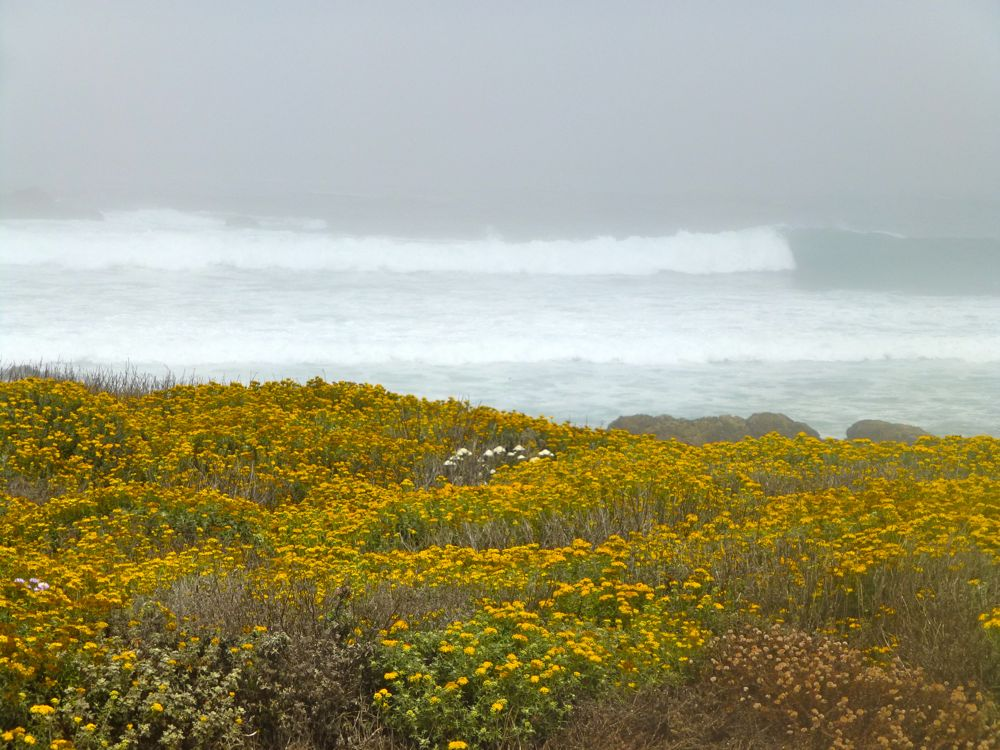 17 Mile Drive, California in the fog