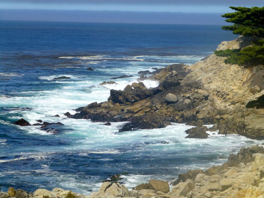 Pacific Ocean by the Lone Cypress on 17 Mile Drive, California
