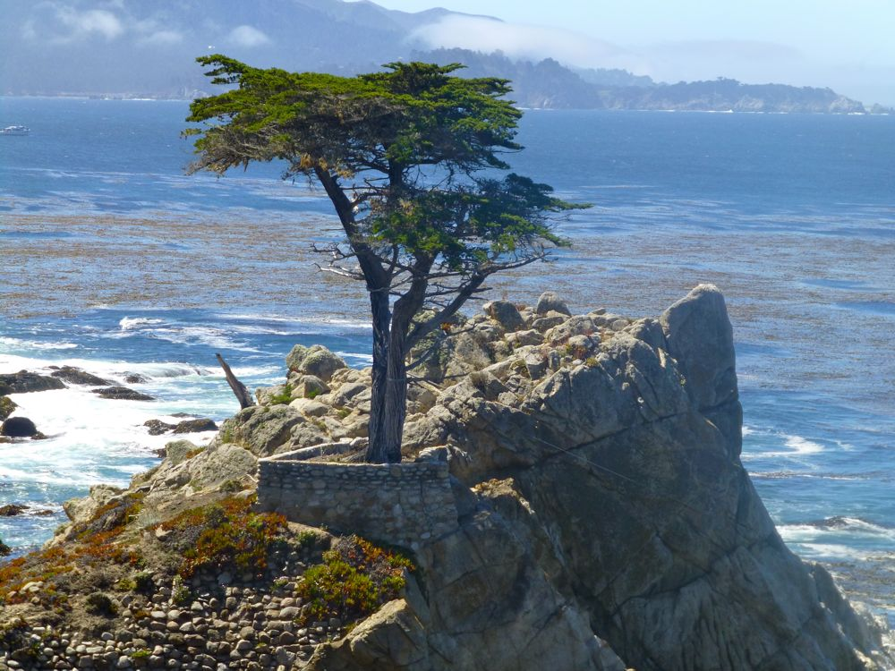 The Lone Cypress on 17 Mile Drive, California