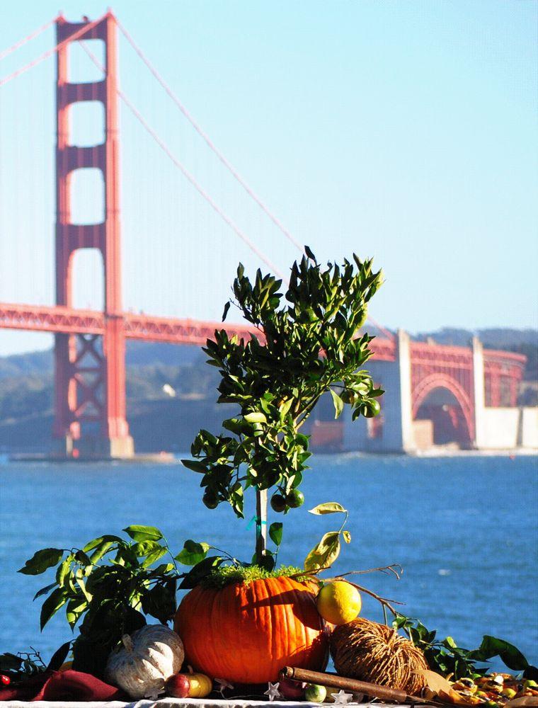 Kirby Cove, Golden Gate Bridge San Francisco