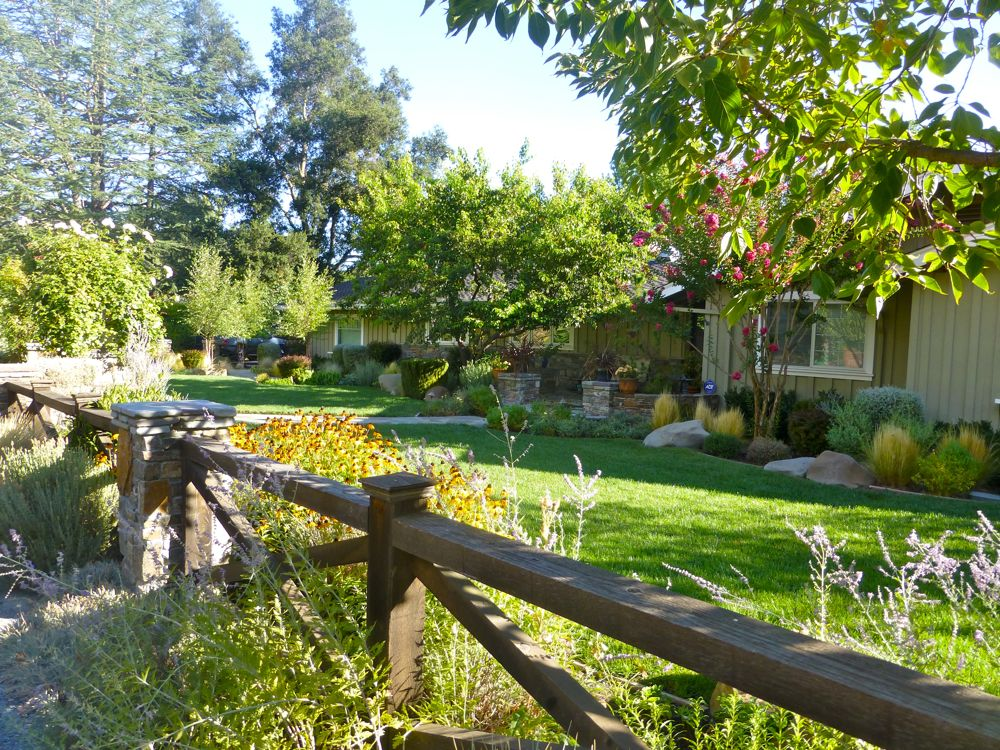 Danville front garden on a morning walk, Danville CA USA