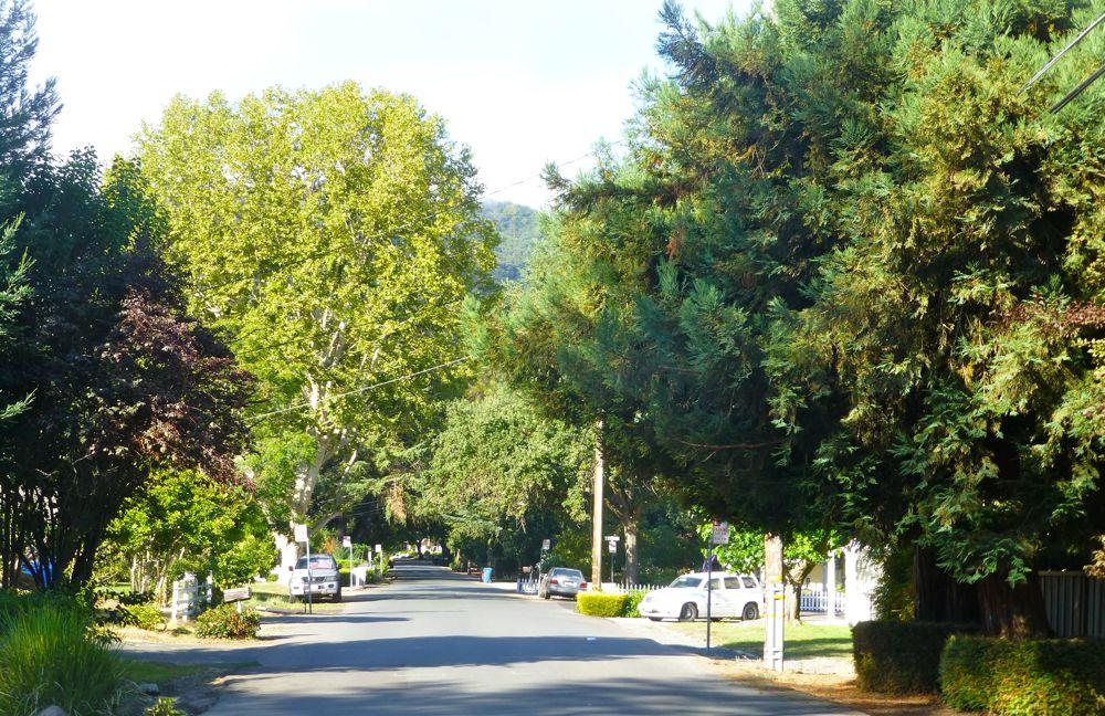 Danville street on a morning walk Danville CA USA
