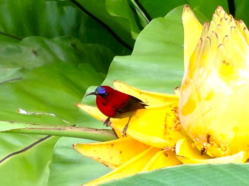 Bird in Singapore's Botanical Gardens