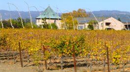 Califorinia winery in November