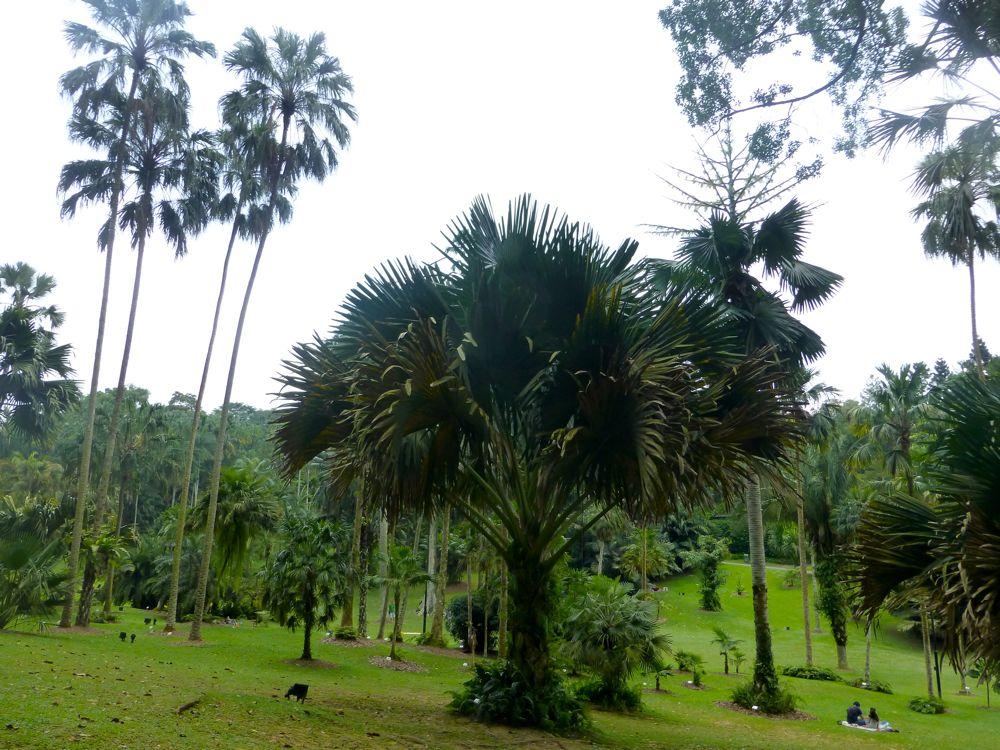 The Singapore Botanical Gardens