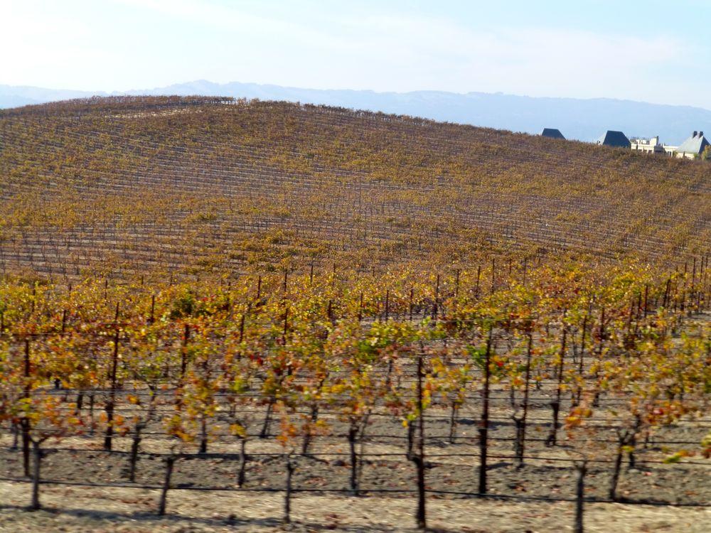 In November in California's Napa Valley