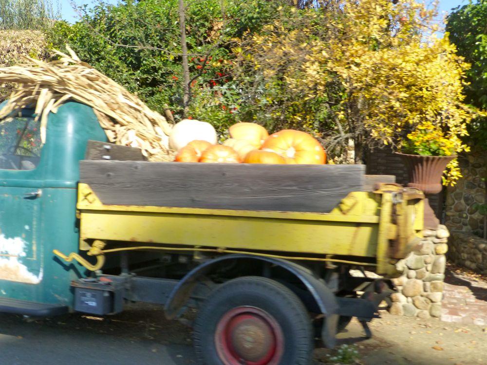 Truck of pumplins in Napa Valley in November