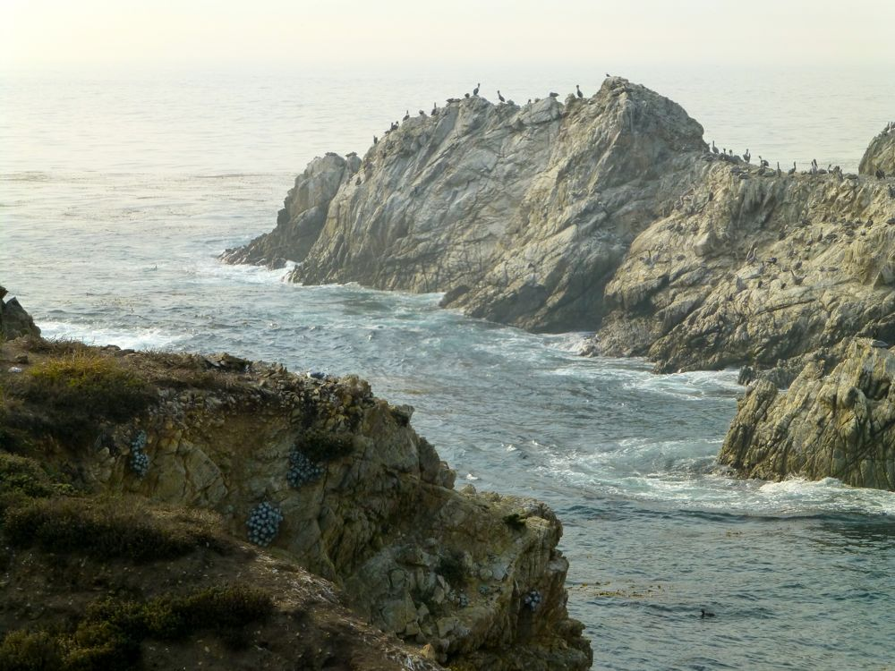 The Bird Island Point Lobos Carmel. California, USA