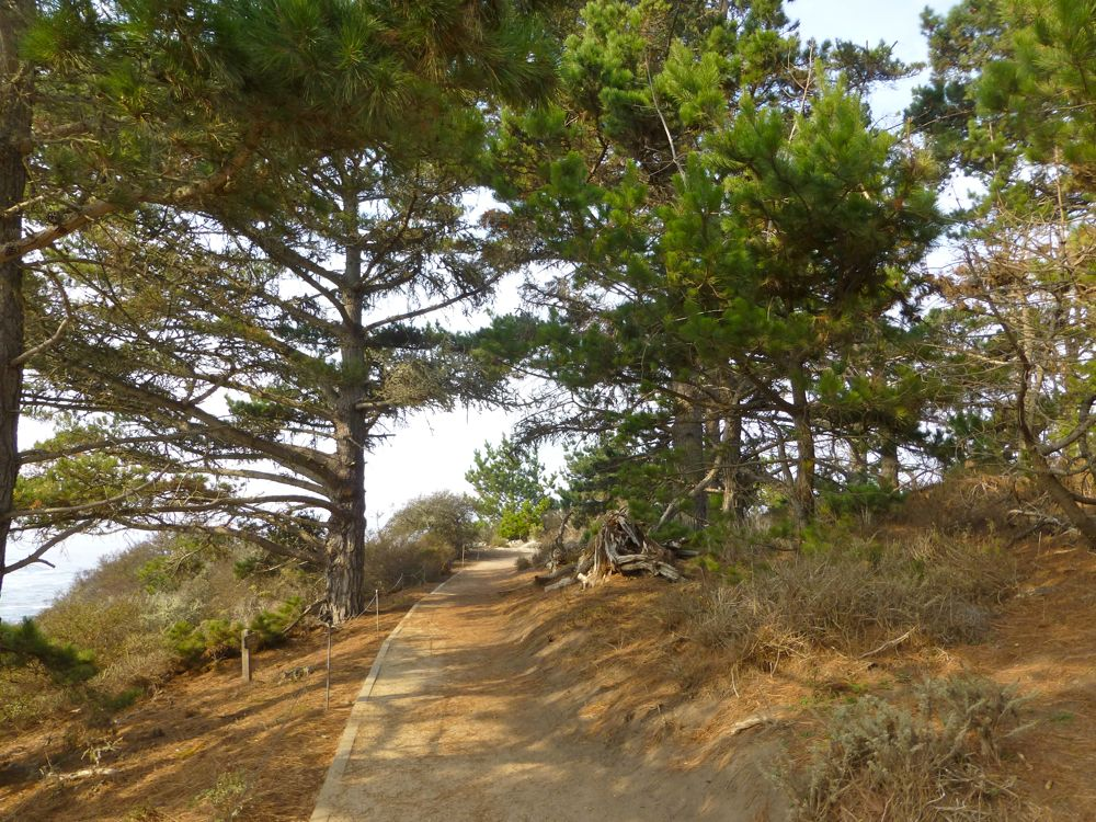 Pathway at south Point Lobos, Carmel, California, USA