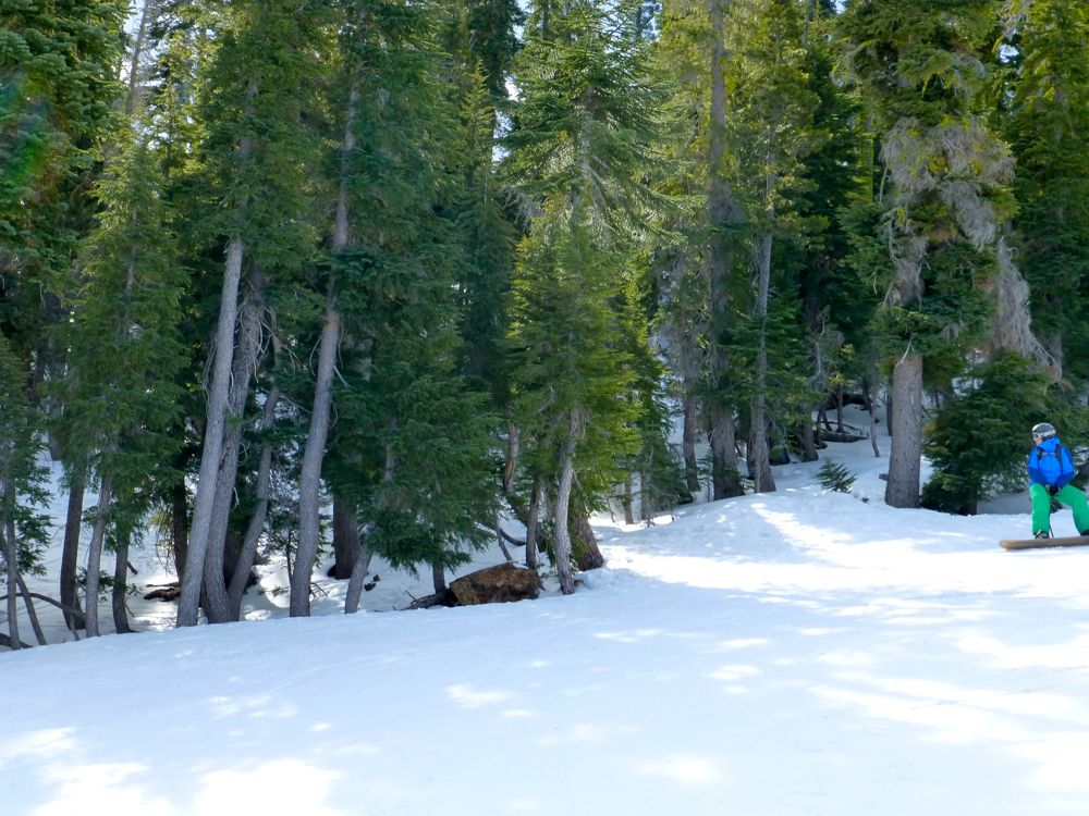 Snowboarding in the trees, Alpine Meadows, Lake Tahoe, California