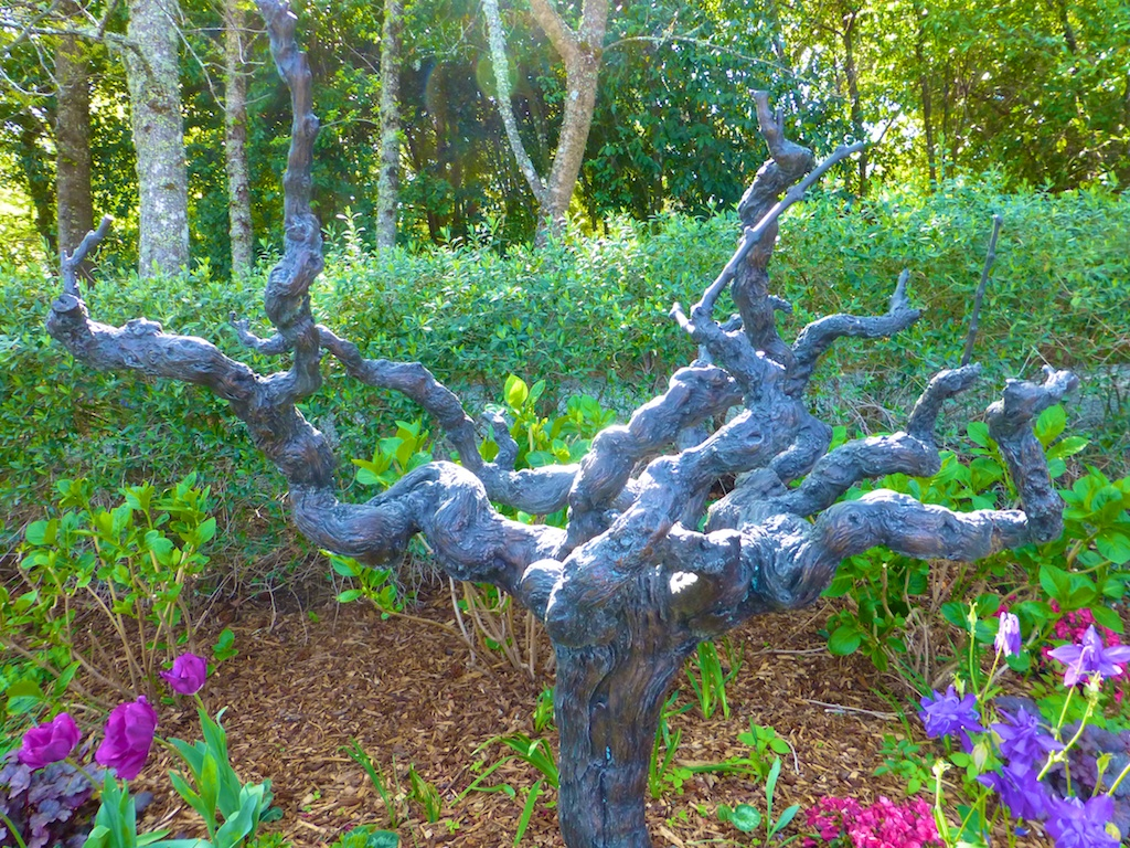 Ancient vines at Rombauer, winery, Napa Valley, California