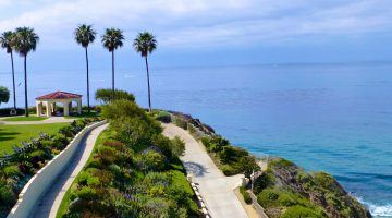 Palm Trees at The Ritz Carlton, Dana Point, California, USA