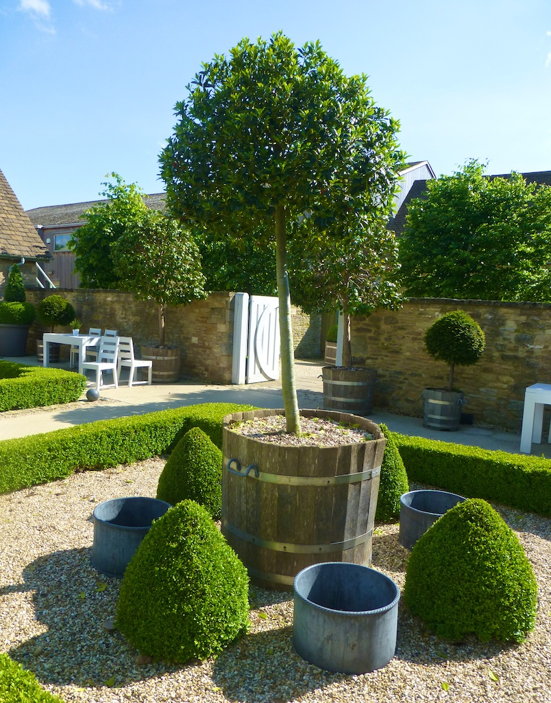 olly tree topiary, Daylesford Barns in the Cotswolds