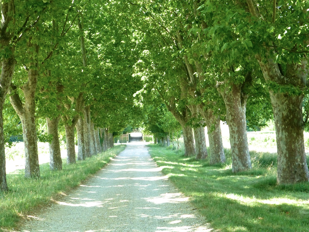 Avenue of trees in Lourmarin Provence France