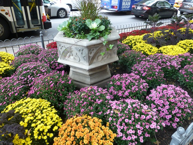 Autumnal flower beds in Chicago