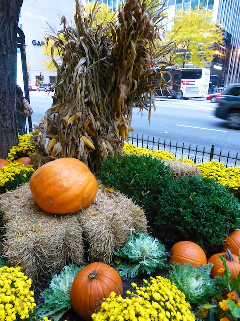 Chicago flower beds with Pumpkins!