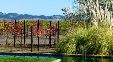 Vineyards by the pond at Cornerstone, Sonoma Valley, California
