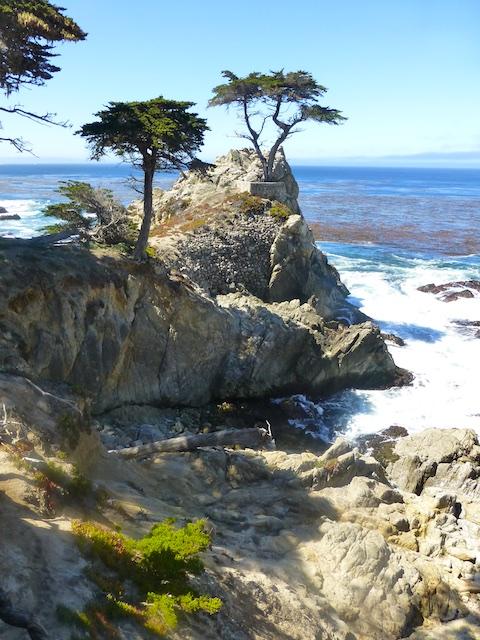 By the Lone Cypress, Carmel, California