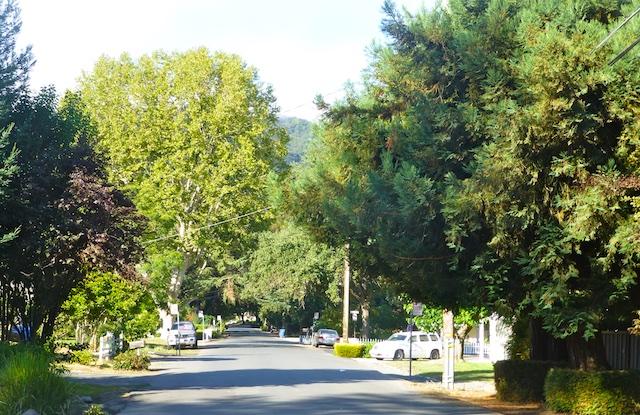 Leafy lanes of Danville, California, USA