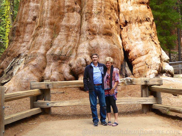 By the foot of General Sherman, Sequoia National Park, California, USA