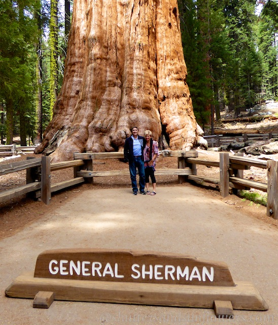 At the foot of General Sherman, Sequoia National Park, California, USA