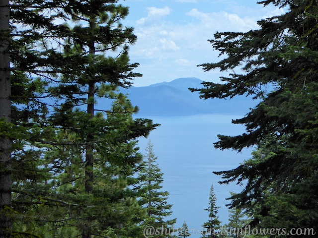 Views of Lake Tahoe from the Tahoe Rim Trail