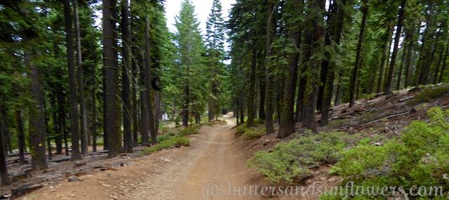 The fire road ithe Tahoe Rim Trail, Lake Tahoe, California