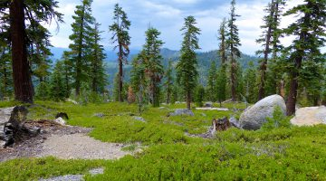 Walking on the Tahoe Rim Trail, Lake Tahoe, California, USA