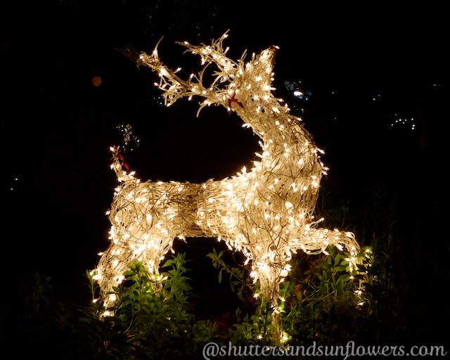 Christmas reindeer Carmel-by-the-sea, California
