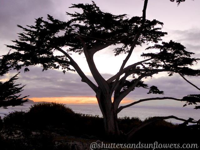 Carmel-by-the-Sea dusk in December