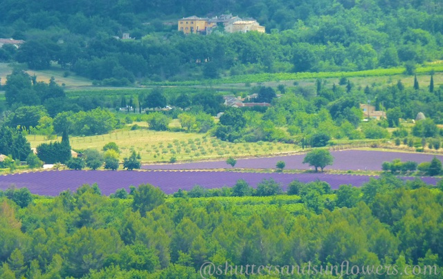 Travel tips for visiting the lavender fields of Provence
