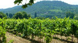 Vineyards of Provence, France