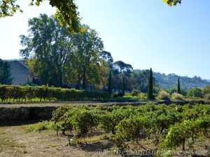 Chateau Canorgue, Bonnieux, Luberon, Vaucluse, Provence