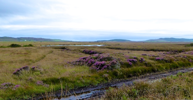 Islay moors and heather