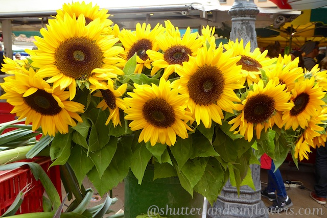 Sunflowers in Lourmarin's Friday market, Luberon, Vaucluse, Provence, France