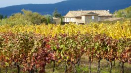 Luberon vineyards by Ménerbes in Autumn