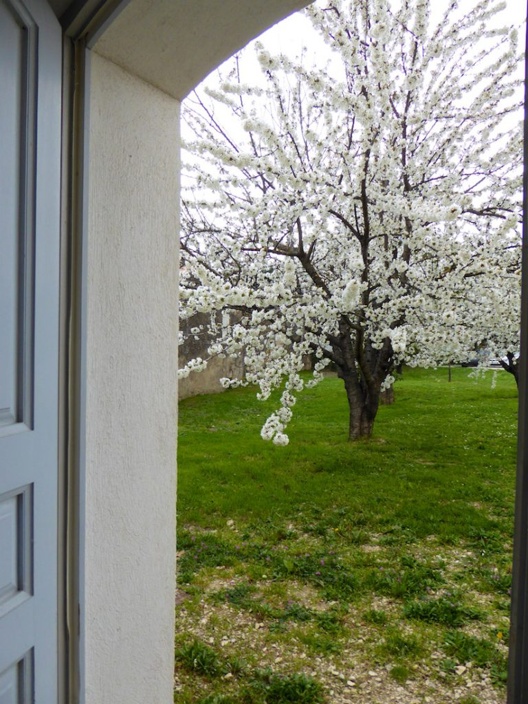 cherry blossoms from the door of Maison des Cerises, Lourmarin
