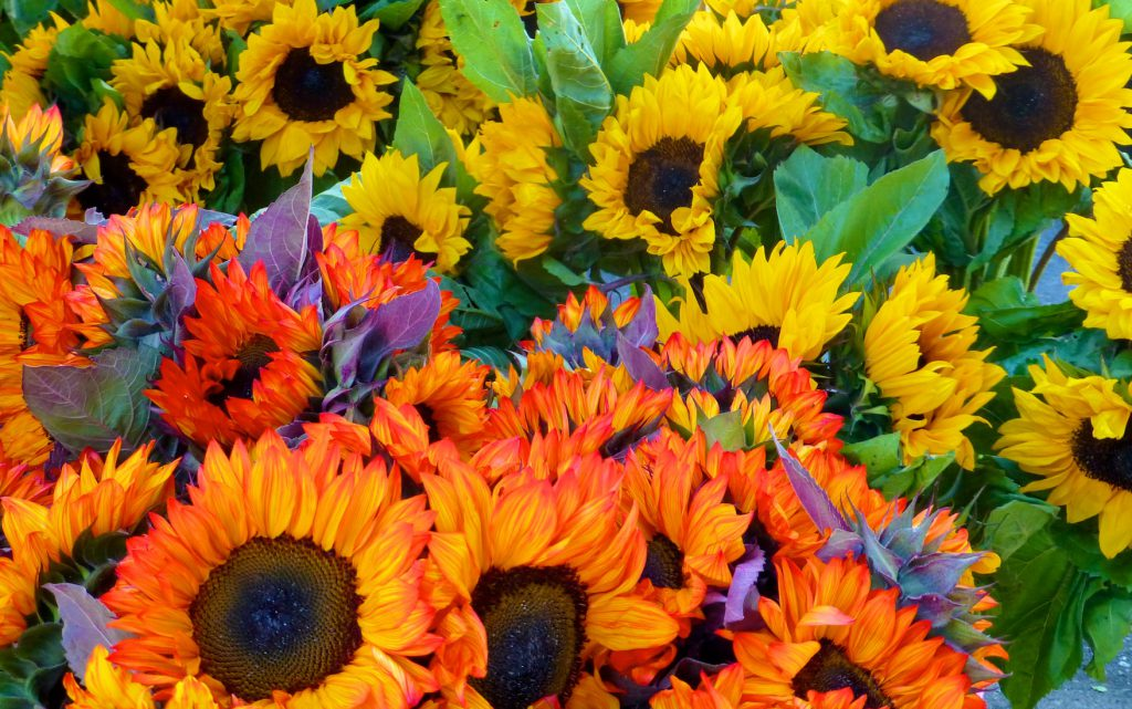 Ferry Building Farmer's market, sunflowers