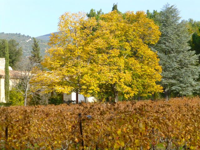 Autumn shades in Provence