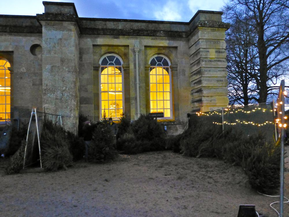 Christmas trees for sale outside Blenheim Palace, Woodstock, England